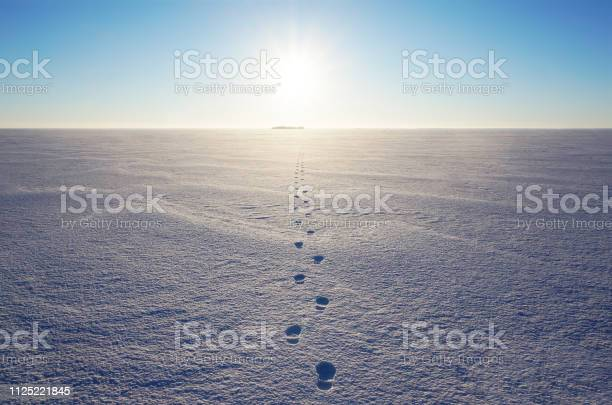 Photo of Fresh footprints on snow field
