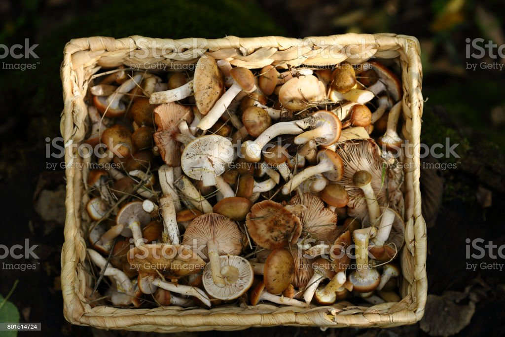 fresh Forest Mushrooms stock photo