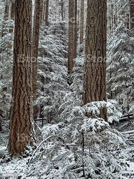 Photo of Fresh forest snowfall