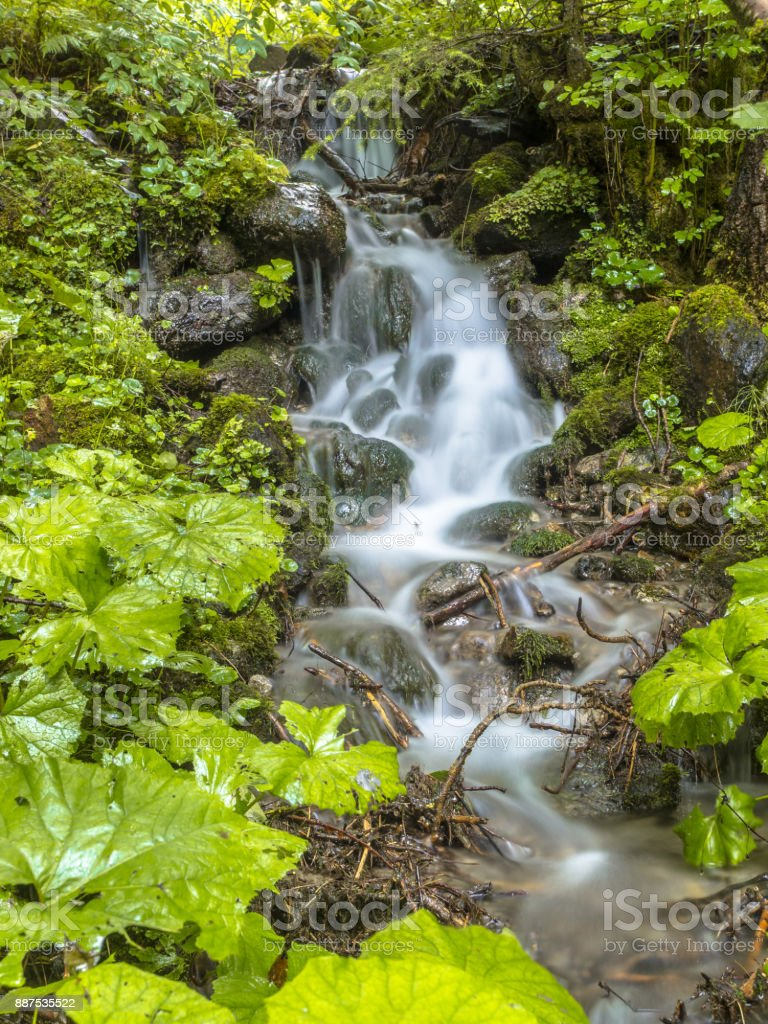 Fresh forest stream stock photo