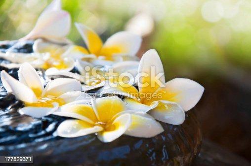 909806032istockphoto Fresh Frangipani flowers floating on the jar 177829371