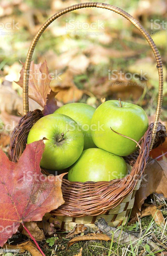 Fresh freen apples royalty-free stock photo