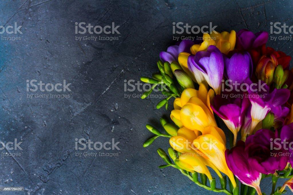 新鮮小蒼蘭花圖像檔