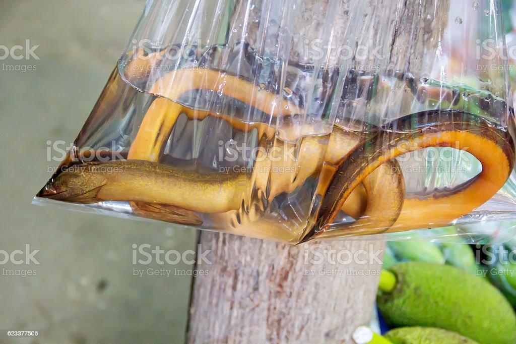 Fresh fresh water eel - Photo