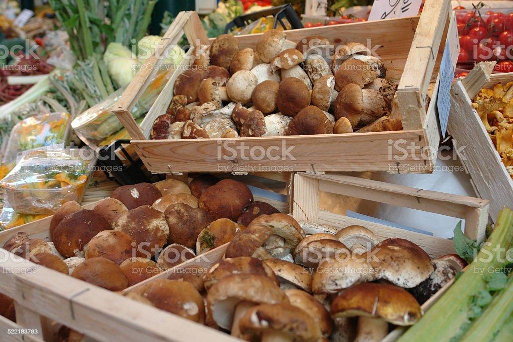 Fresh from the Forest Wild Mushrooms: Boletus edulis stock photo