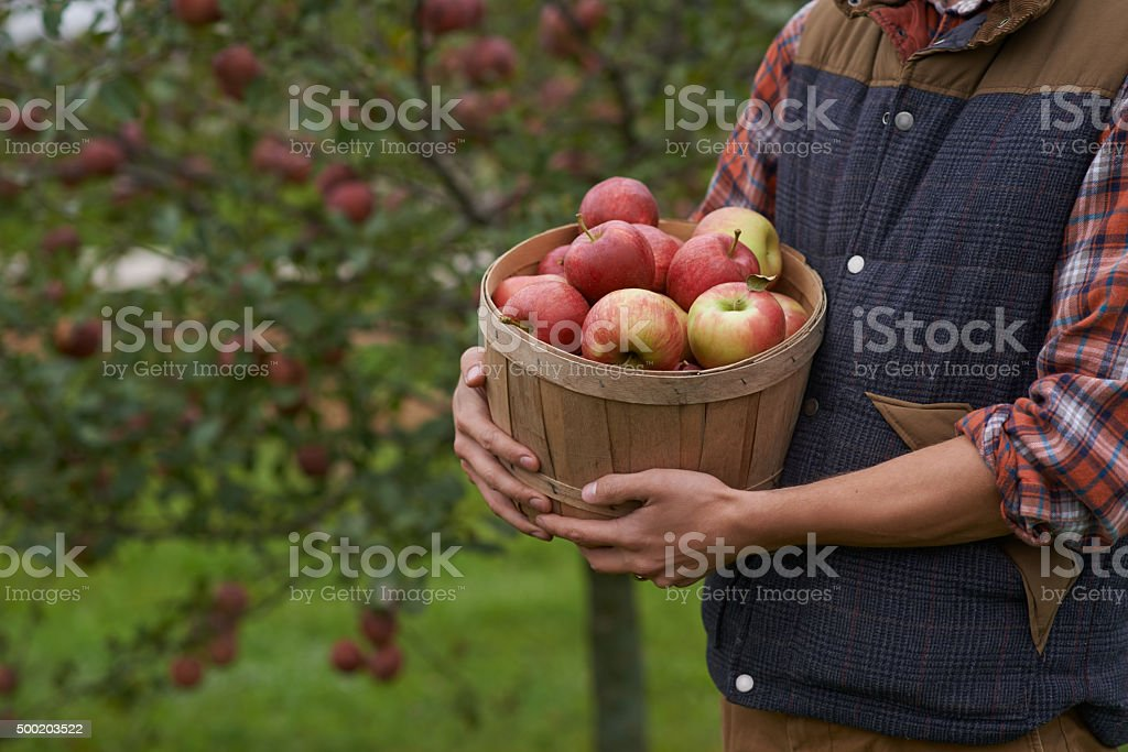 Fresh from the tree! stock photo