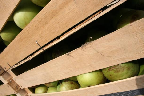 Frisches Obst, Äpfel aus dem Garten – Foto
