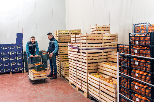 Fresh fruits and vegetables in warehouse