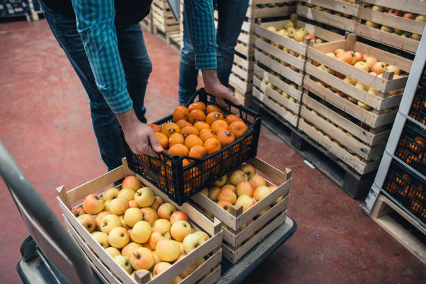 Fresh fruits and vegetables in warehouse Fresh fruits and vegetables in warehouse food warehouse stock pictures, royalty-free photos & images