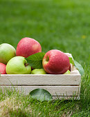 Fresh garden green and red apples in box. On outdoor grass meadow with copy space for your text