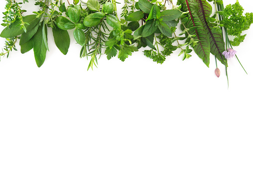 Various kinds of fresh garden herbs isolated on white background