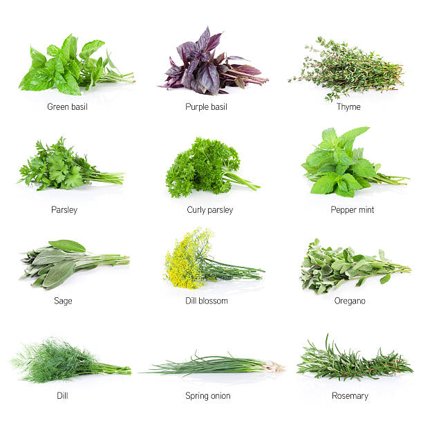 fresh garden herbs set - thyme stock photos and pictures