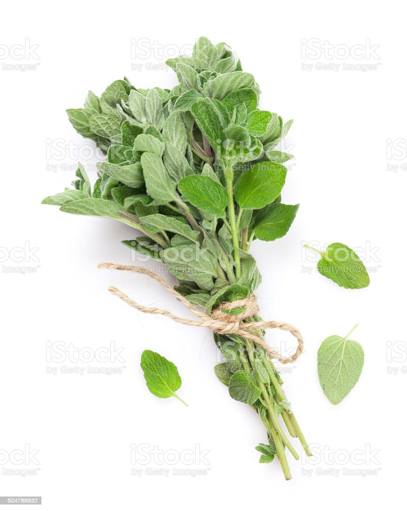 Fresh garden oregano herb stock photo