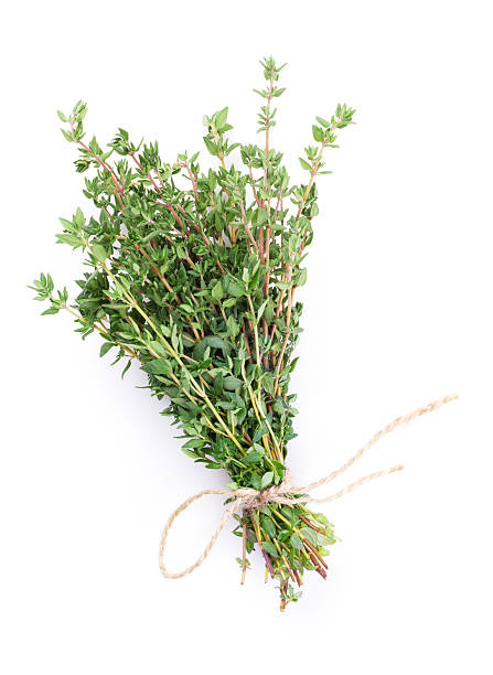 fresh garden thyme herb - thyme stock photos and pictures