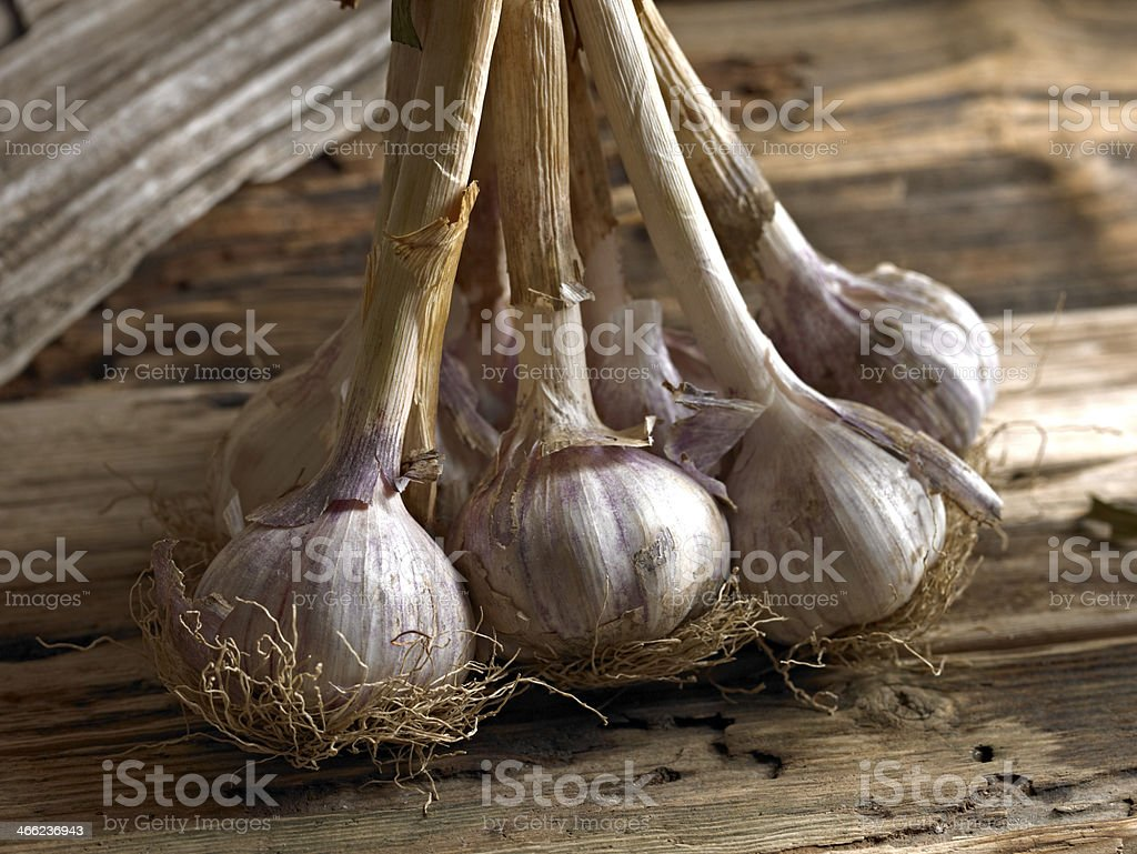 Fresh Garlic royalty-free stock photo