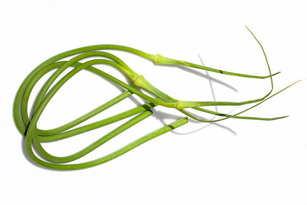 fresh garlic scapes stock photo