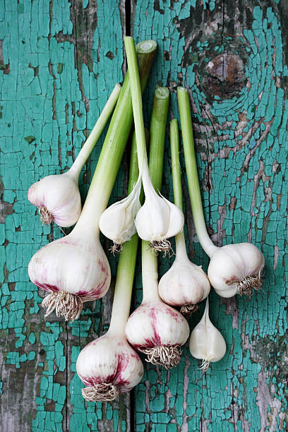fresh garlic, top view - garlic stock photos and pictures