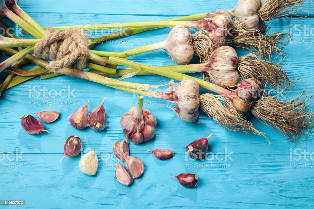 fresh Garlic with Dill-Flower on blue wood Table stock photo
