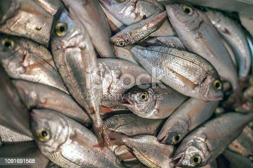 Fresh Gilthead Bream Fish at the Fish Market in Rijeka, Croatia