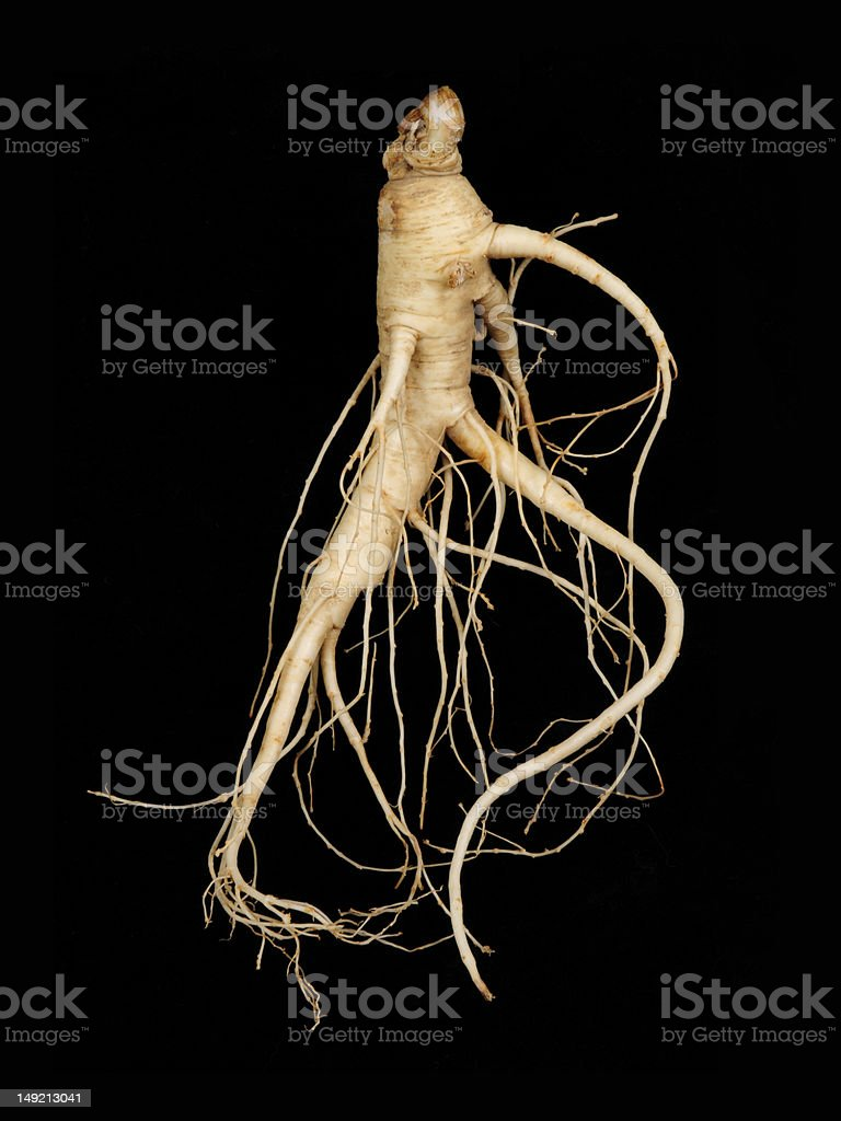 Fresh Ginseng, Man Root royalty-free stock photo