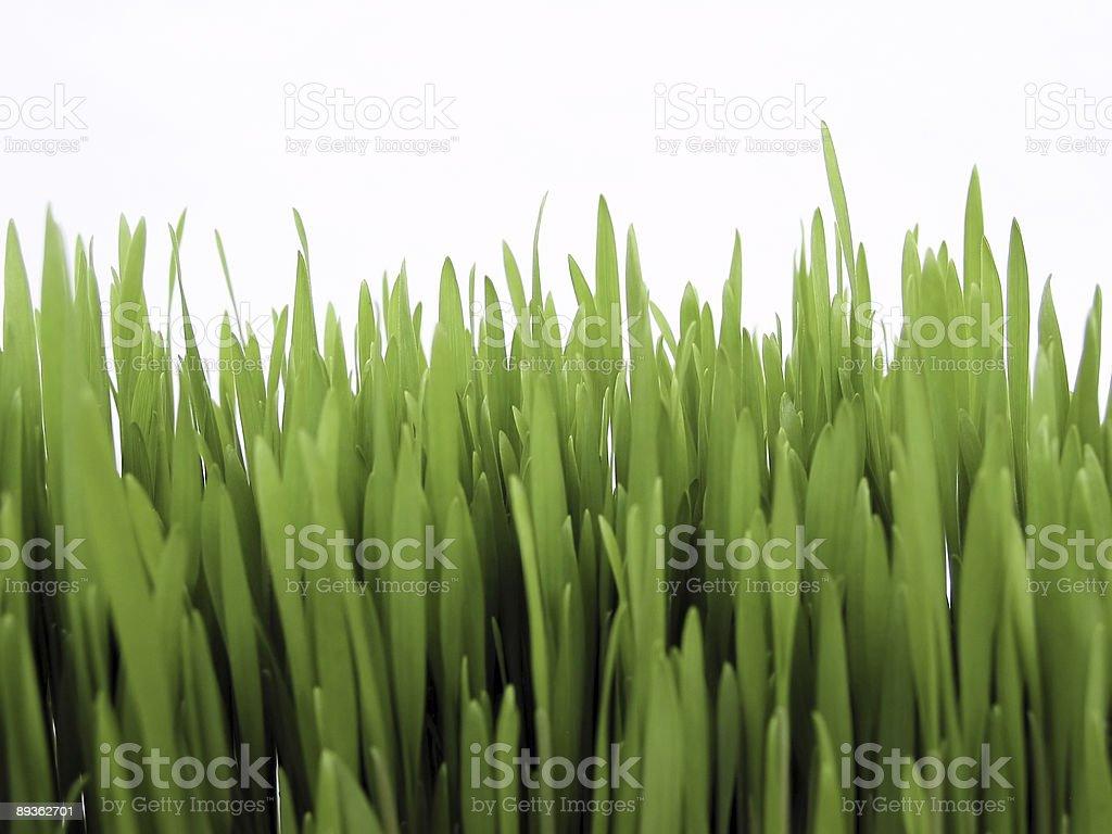 Fresh grain royalty-free stock photo