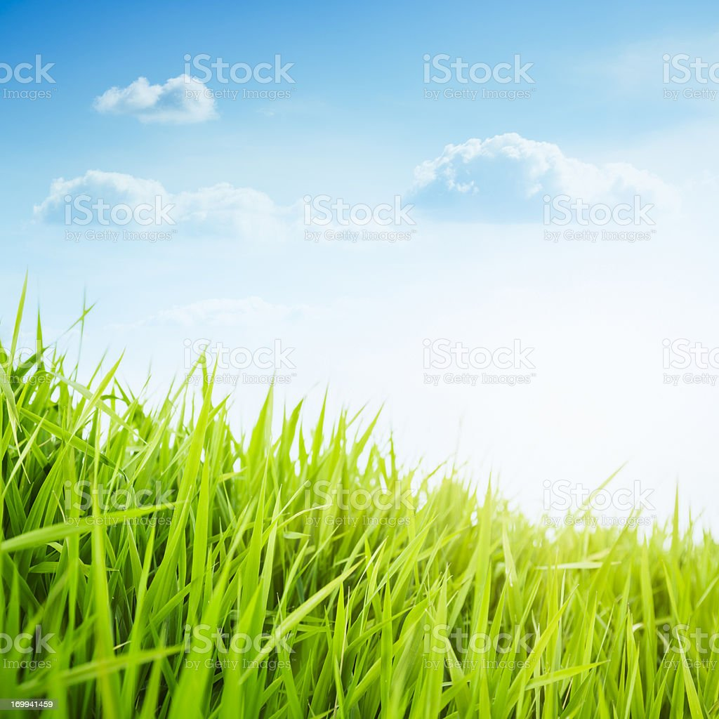 Fresh grass against delicate bright sky. Spring. royalty-free stock photo
