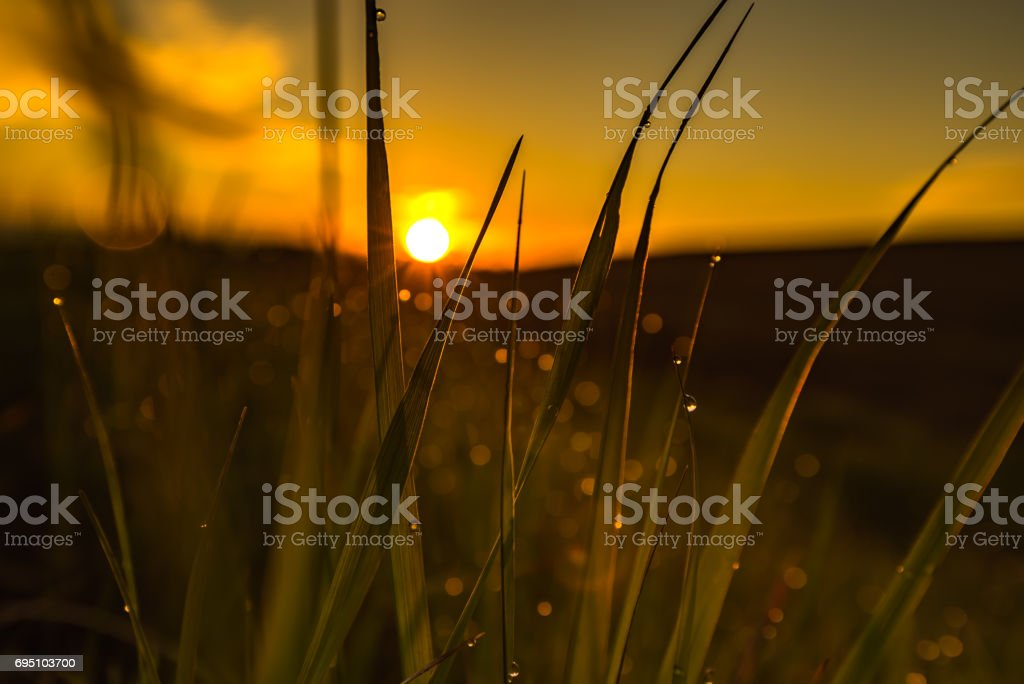 Fresh grass in the morning light stock photo
