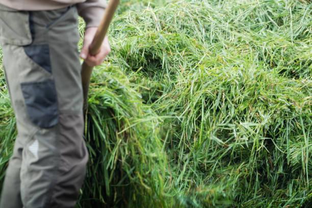 Fresh grass on the wheelbarrow stock photo