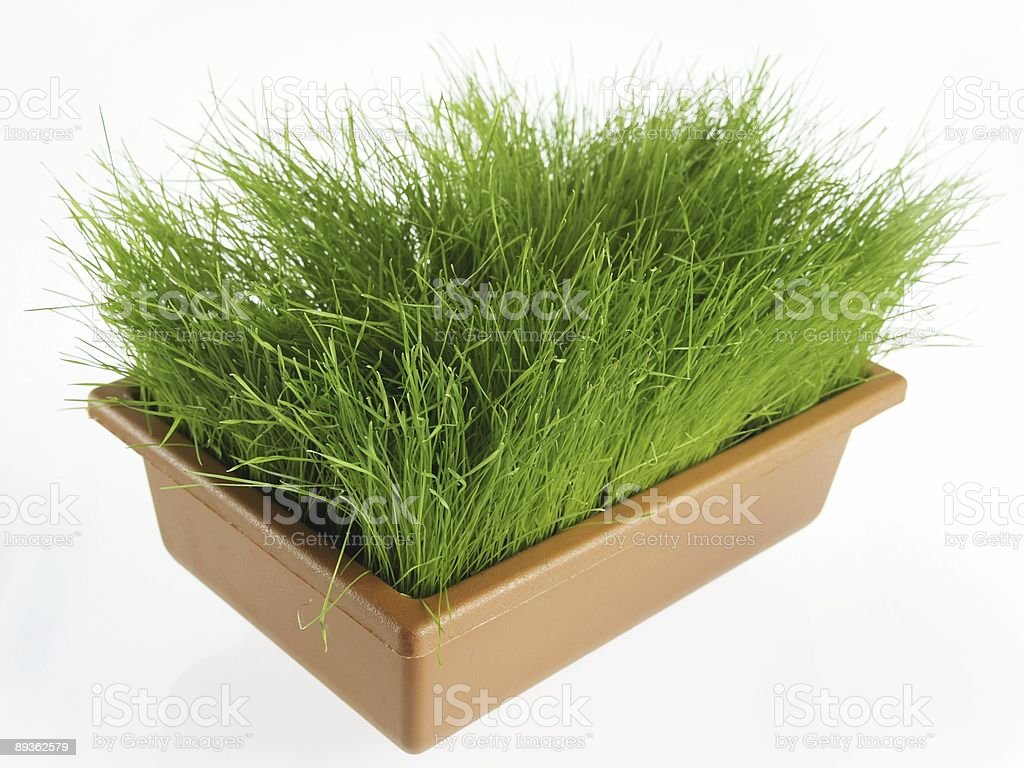 Fresh grass royalty-free stock photo
