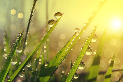 istock Fresh grass with dew drops at sunrise. 495703920