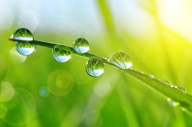 fresh grass with dew drops - dauw stockfoto's en -beelden
