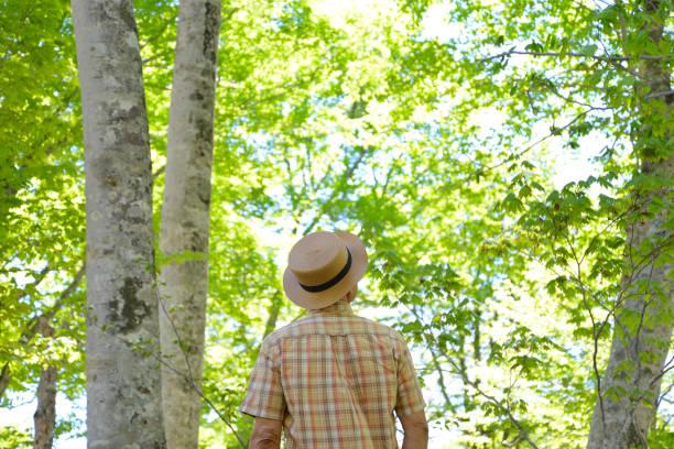 fresh green and senior - forest bathing foto e immagini stock