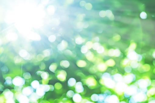 fresh green and sun