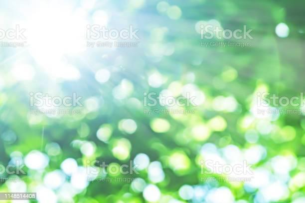Photo of fresh green and sun