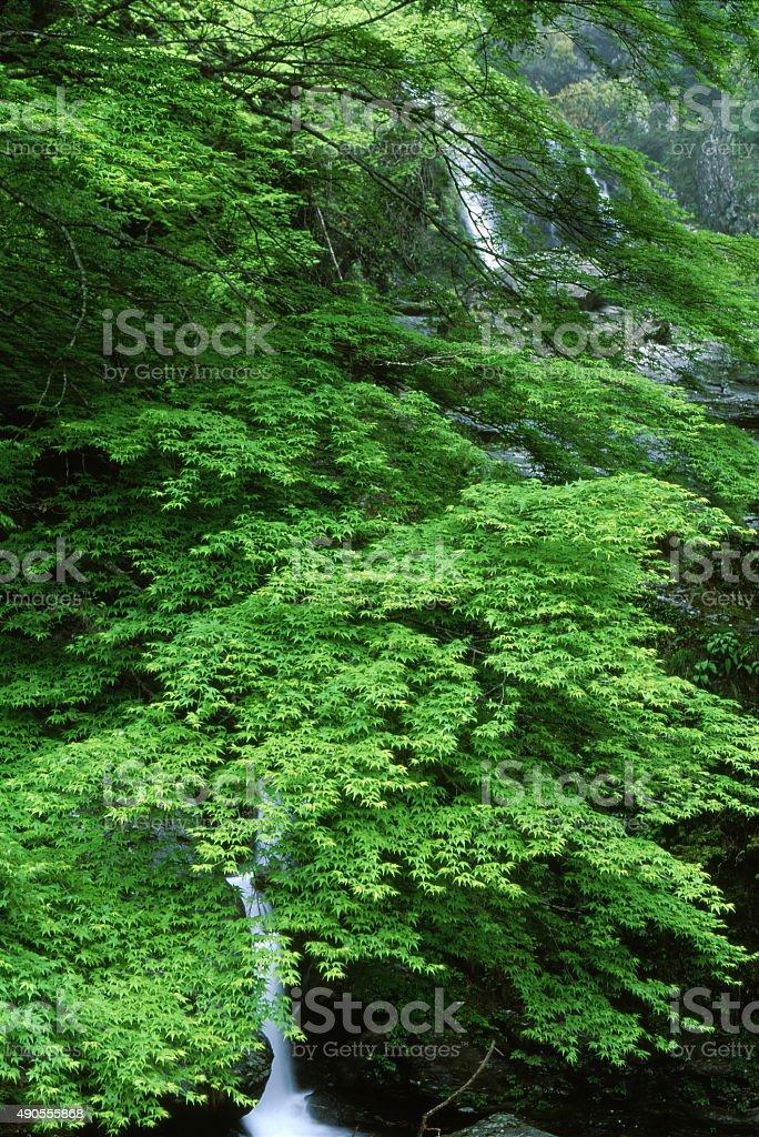 新鮮な緑と滝 ストックフォト