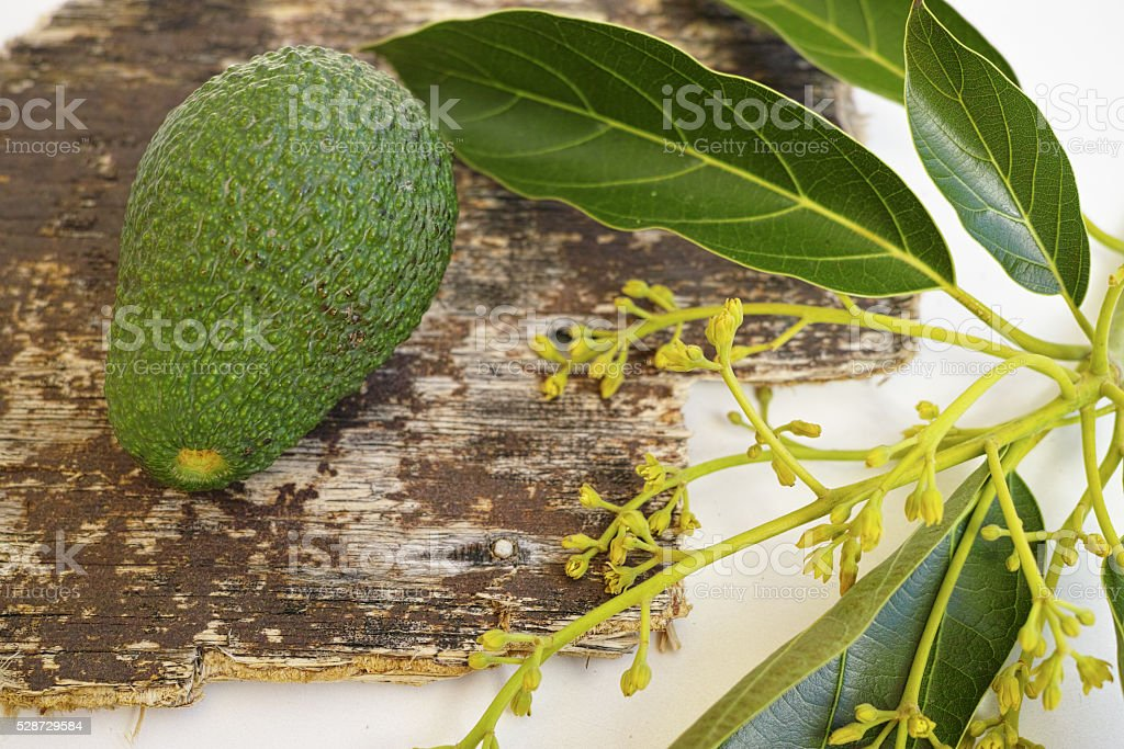 Fresh green avocado with leaves stock photo