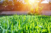 新鮮な緑の裏庭