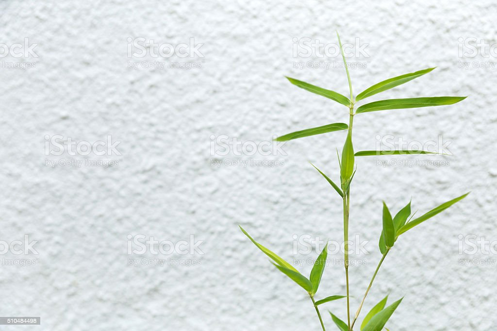 Fresh green bamboo leaves on white textured wall -stock image stock photo