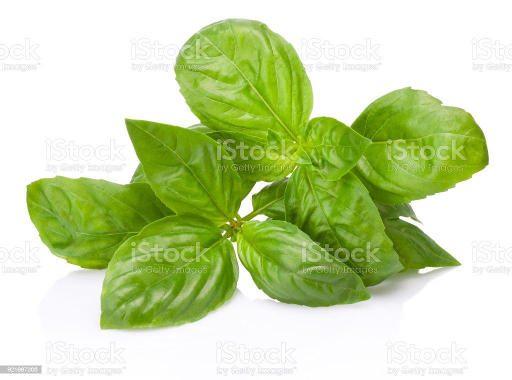 Folhas de manjericão fresco verde erva isoladas no fundo branco - foto de acervo