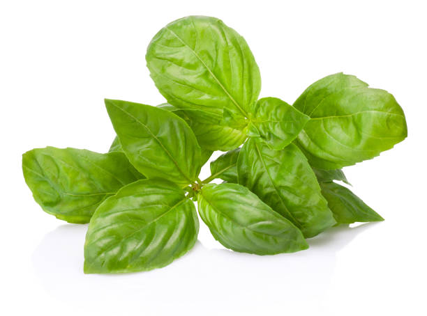 fresh green basil herb leaves isolated on white background - basil stock photos and pictures