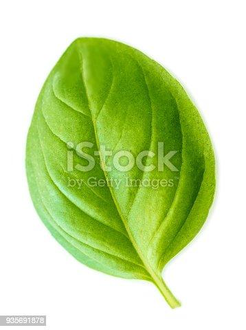 Fresh green  basil leaf isolated on white background, macro