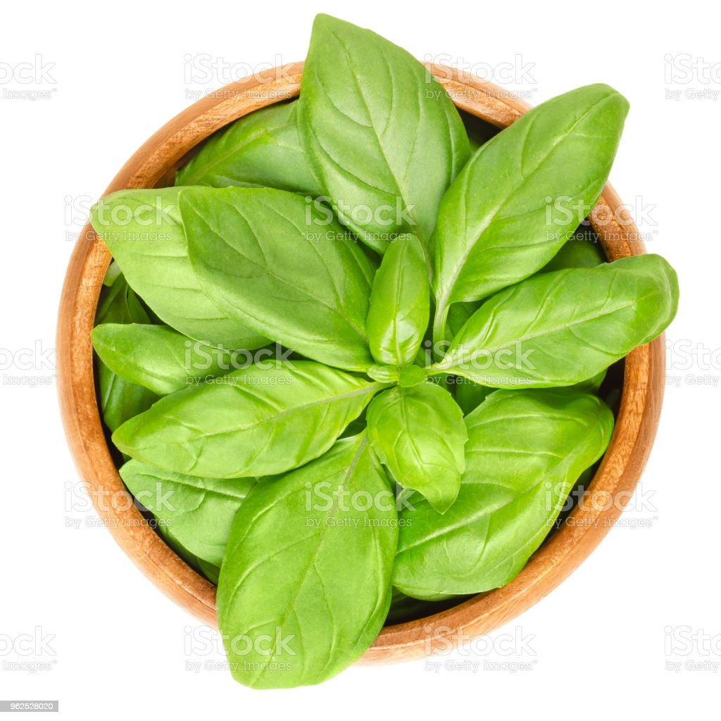 Fresh green basil leaves in wooden bowl over white - Royalty-free Austria Stock Photo