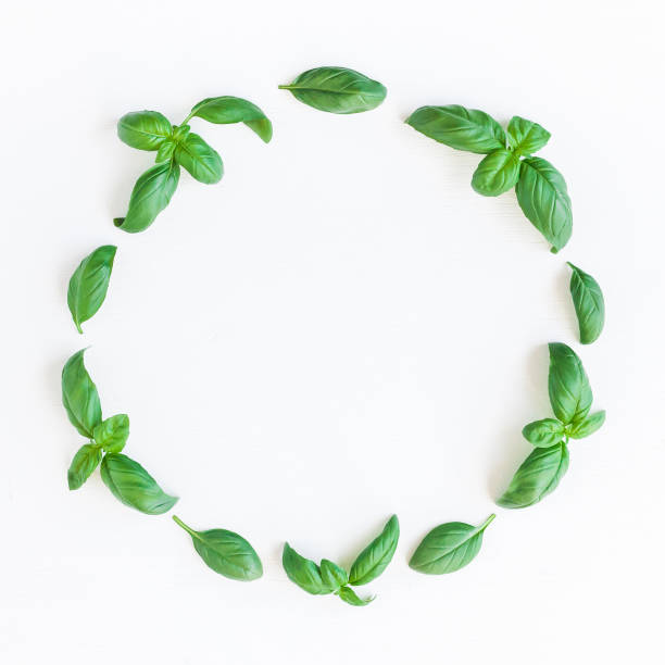 fresh green basil on white background. flat lay, top view - basil stock photos and pictures