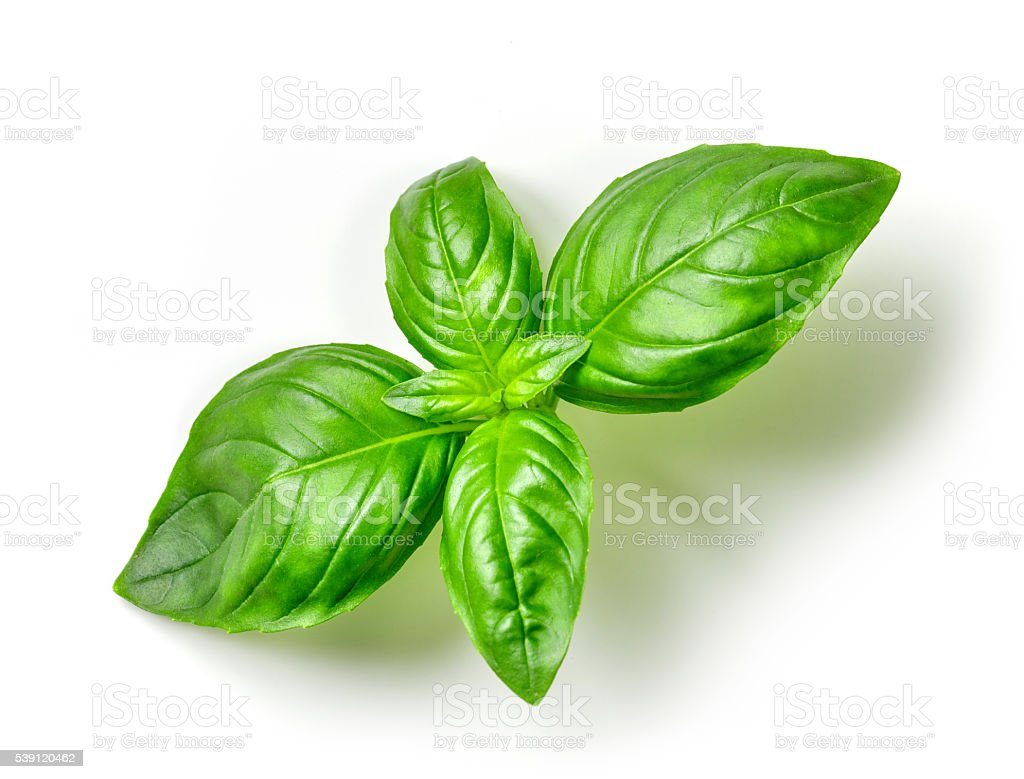 fresh green basil​​​ foto