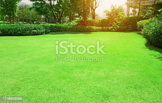 istock Fresh green Burmuda grass smooth lawn with curve form of bush, trees on the background in the house's garden  under morning sunlight 1216503255