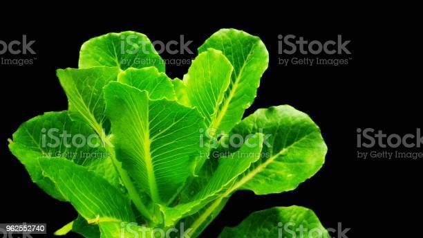 Foto de Repolho Verde Fresco e mais fotos de stock de Alimentação Saudável