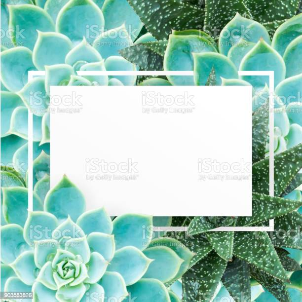 Fresh green cactus leaves with white paper and frame for message and picture id903583826?b=1&k=6&m=903583826&s=612x612&h=ybssc8cyobwdoarhatnfoncibcsvtn5 bwaazq2ofja=