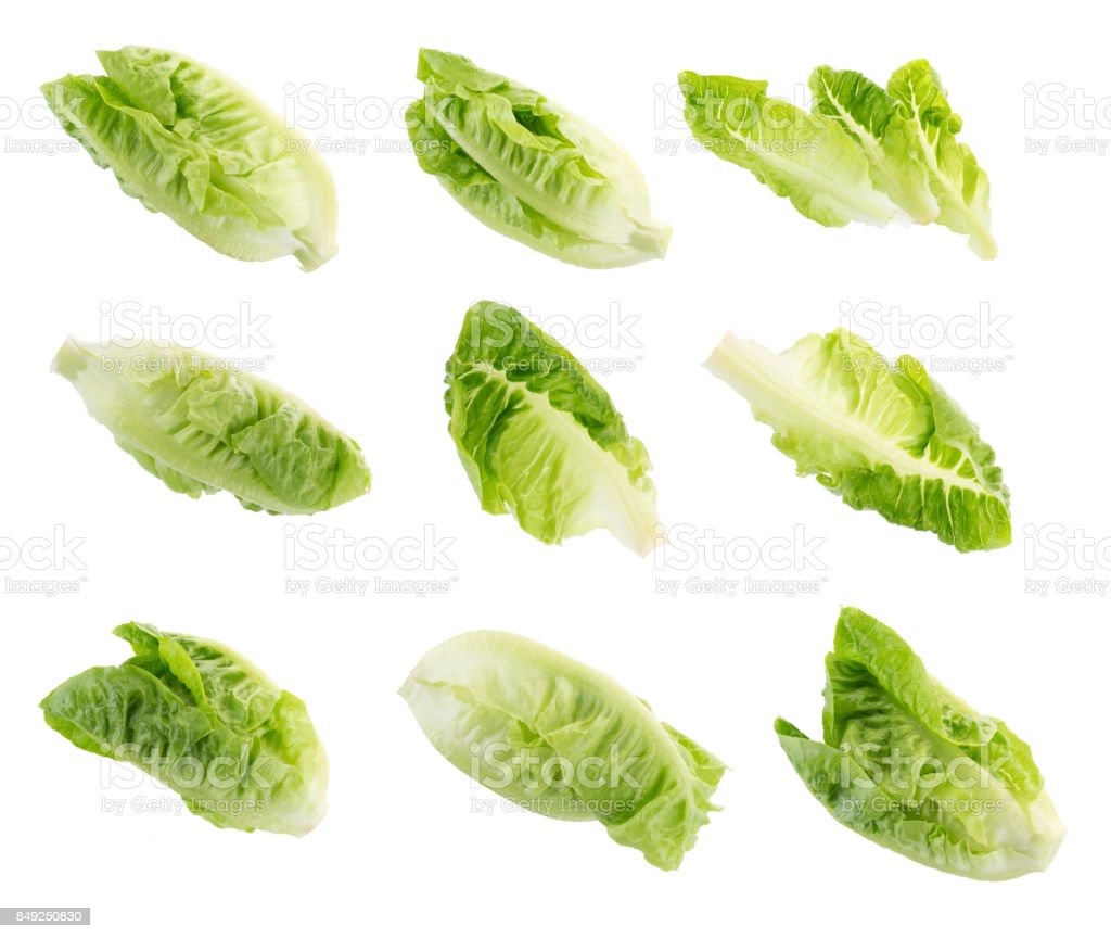 Fresh green cos lettuce Isolated on White Background stock photo