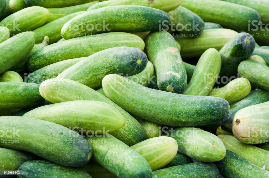 Fresh green cucumbers background at market