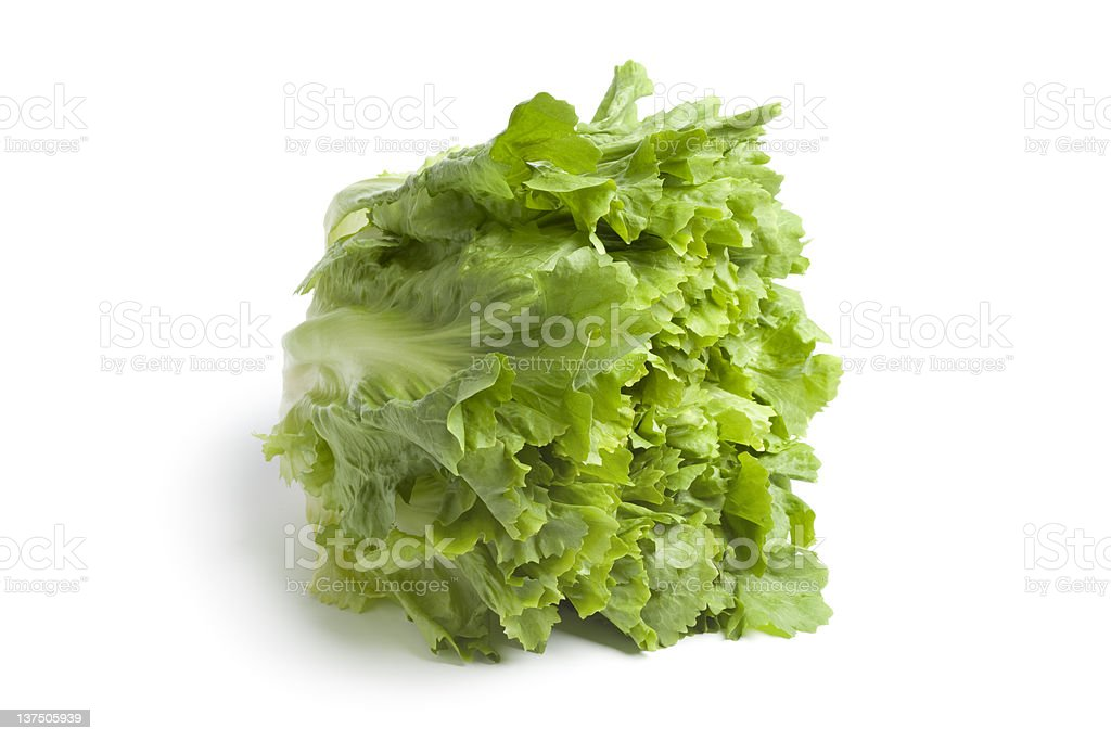 Fresh green endive stock photo